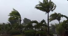 Palm Trees Thrash In Hurricane Wind - Noul