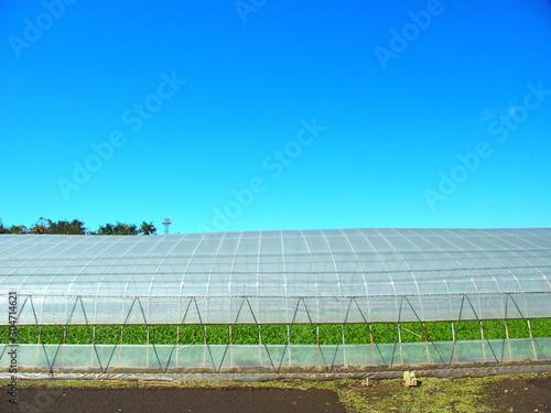 Fototapety, obrazy: コマツナ栽培のビニールハウスと青空