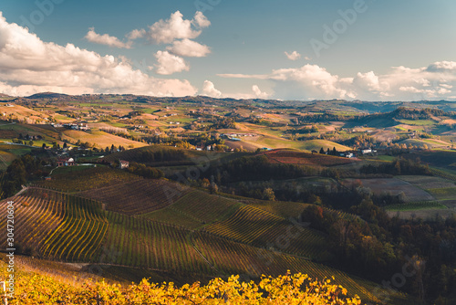 Vineyards in the province of Cuneo, Piedmont, Italy Canvas Print