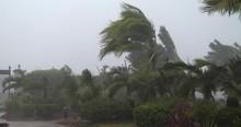 Palm Trees Thrash In Powerful Hurricane Wind - Noul