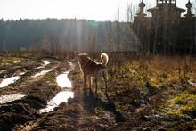 Dog In The Sun Near The Church