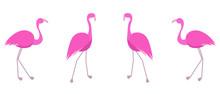 Pink Flamingo Set. Cute Flat V...