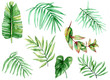 watercolor tropical leaves on white background