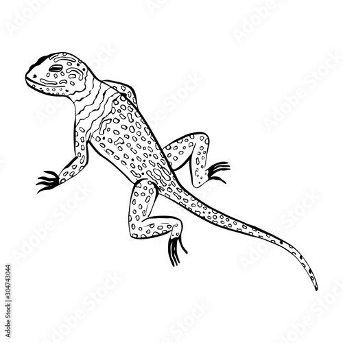 Salamander lizard animal sketch engraving raster illustration Poster Mural XXL