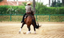 Reining Competition
