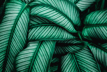 Green Leaves Nature  Background, Closeup Leaves Texture, Tropical Leaves