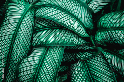 Fototapete - green leaves nature  background, closeup leaves texture, tropical leaves