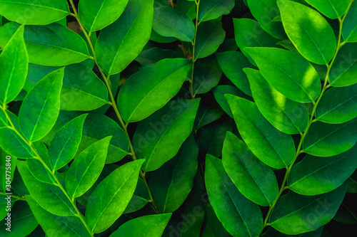 tropical leaves, abstract green leaves texture, nature background - 304775840