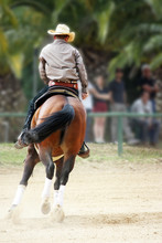 Reining Competition, Reining I...