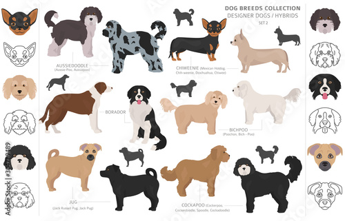 Photo Designer dogs, crossbreed, hybrid mix pooches collection isolated on white