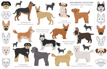 Designer Dogs, Crossbreed, Hyb...