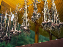 Garlic Drying On A Rope