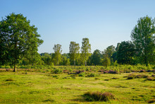 Open Green Grassland Surrounded By Trees