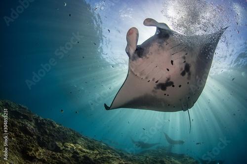 Fototapeta Closeup shot of a Manta Ray fish hanging out underwater in Nusa Penida, Bali
