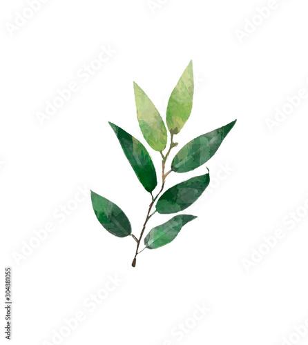 akwarela-nowoczesny-zestaw-elementow-dekoracyjnych-eukaliptus-okragly-zielony-lisc-wieniec-galezie-zieleni-girlanda-obramowanie-rama-elegancka-akwarela-na-bialym-tle-dobre-na-zaproszenie-na-slub-kartka-lub-wydruk