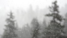 Slow Motion Snowfall With Snowy Trees Focus Push