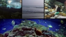 Marine Mural With Frames Showi...