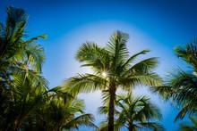 Sunlight Shines Through Palm T...