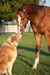 Horse kissing dog