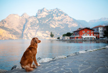 Travel With A Pet. Dog On The ...