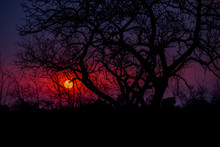 Lacy Silhouette Of Tree Branch...
