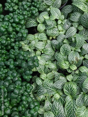 The ornamental plants with different green colors are covered ground Wallpaper Mural