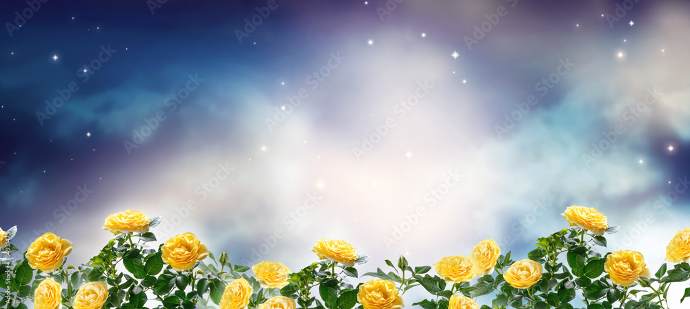 Fototapeta Fantasy fabulous panoramic banner background of magical night sky with shining stars, mysterious clouds and delicate romantic yellow rose flowers garden. Idyllic tender heaven scene, copy space.