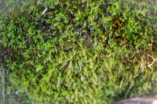 moss on green grass background