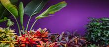 Colorful Croton Leaves Backgro...