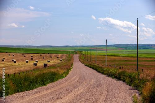 Obraz Rural Gravel Country Road Alberta - fototapety do salonu