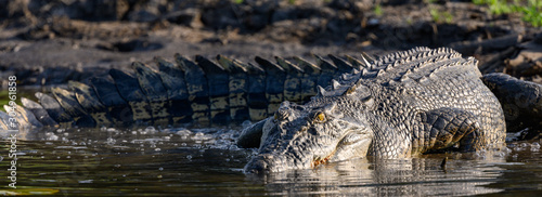 Saltwater Crocodiles in Kakadu National Park. Canvas Print