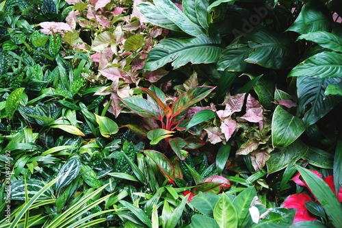 Lush tropical garden plants with a variety of leaf shapes and colors