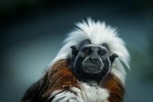 Portrait Of A Punk Monkey