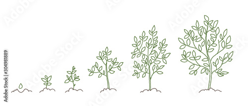 Obraz Trees, growth stages sketch. Animation progress. Plant development. Hand drawn vector line. - fototapety do salonu