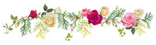 Panoramic View: Red, White, Pink Roses, Thuja (arborvitae). Horizontal Border For Christmas: Flowers, Buds, Leaves, Green Twigs, Cones On White Background, Digital Draw, Watercolor Style, Vector