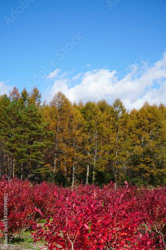 秋の開田高原