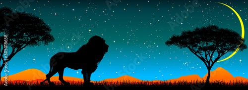 Cuadros en Lienzo  Lion on the background of the night starry sky