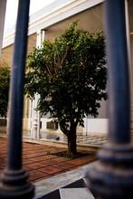 Tree Between Bars