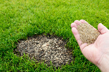 Rasen Reparatur -- Grassamen