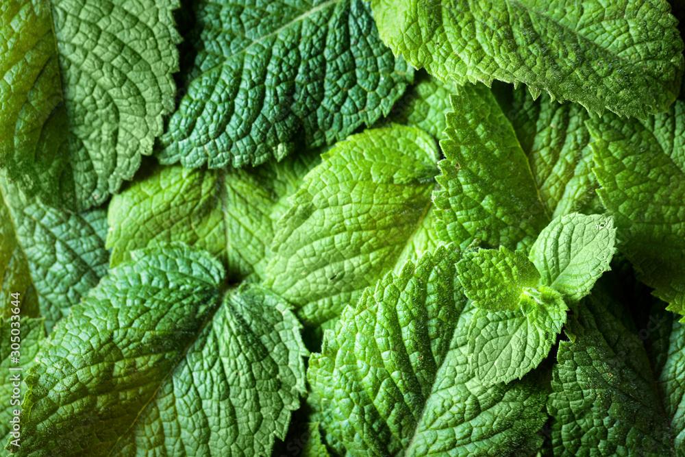 Fototapety, obrazy: Mint leaves background.
