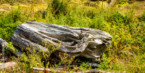 Spoed Fotobehang Onweer An old piece of driftwood on the bank