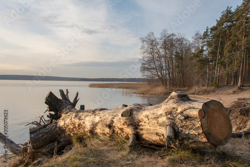 Obraz na płótnie Dry tree trunk lies on the river bank