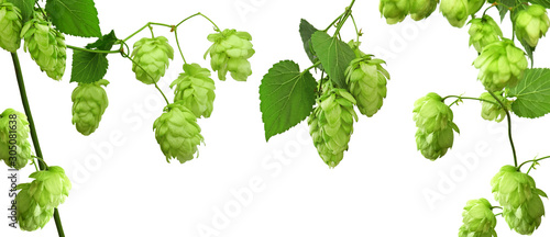 Set of hop cones with leaves Wallpaper Mural