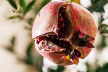 Ripe Round Red Pomegranate Cra...