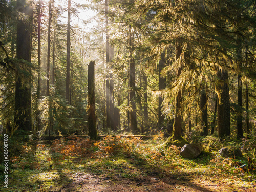 Sunlight shines through green forest with lens flare