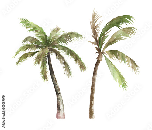 Watercolor isolated palm tree on white background. Hand drawn illustration Wall mural
