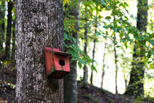 Birdhouse In Mississippi Woods...