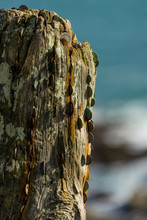 Coins In Wooden Post