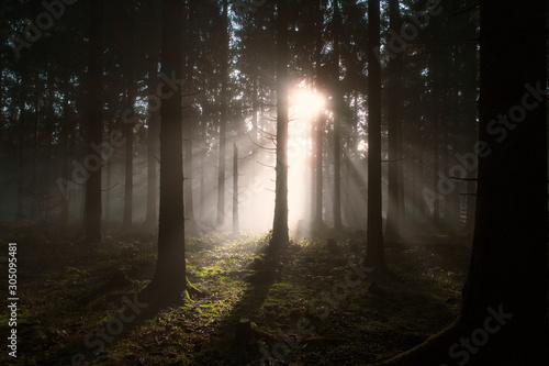 Fotografie, Obraz Die Waldlichtung