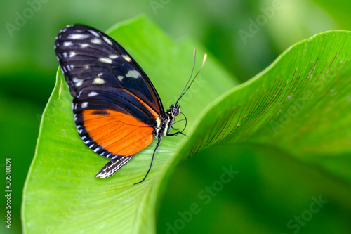 Fond de hotte en verre imprimé Papillon Closeup beautiful butterfly in a summer garden